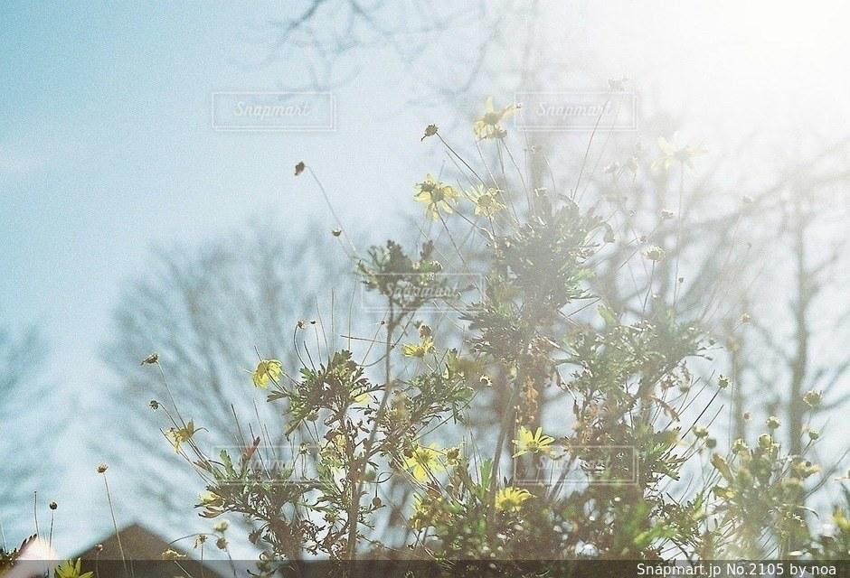 自然 - No.2105