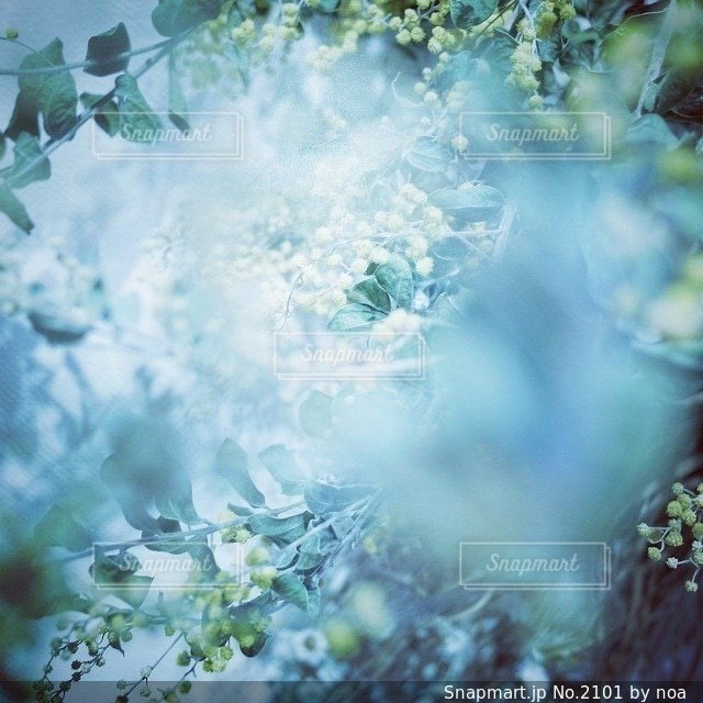 自然 - No.2101