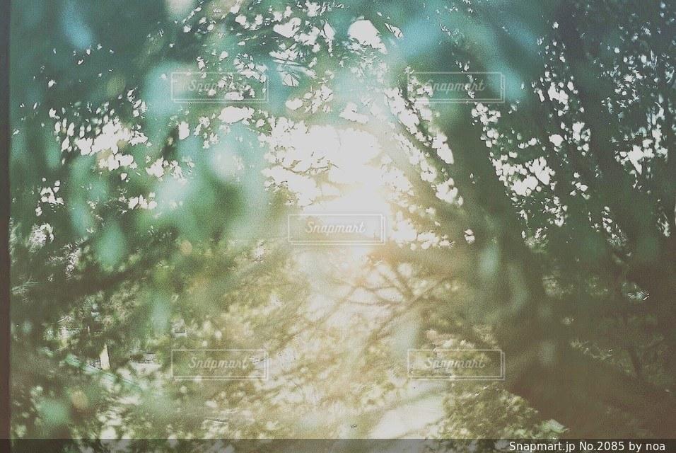自然の写真・画像素材[2085]