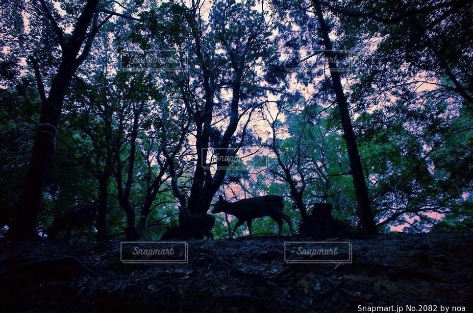 自然の写真・画像素材[2082]