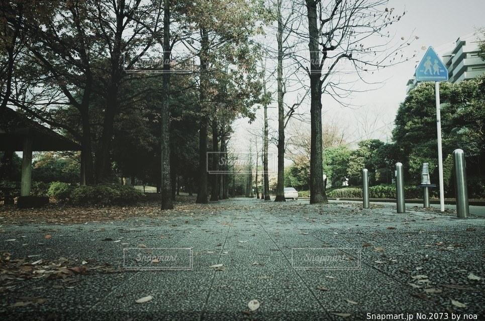 自然の写真・画像素材[2073]