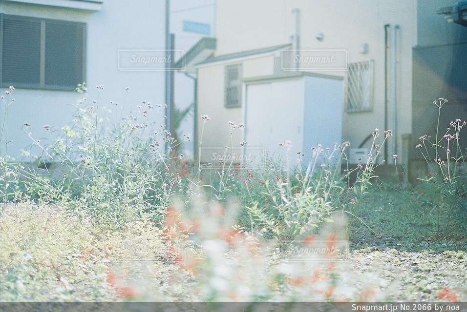自然の写真・画像素材[2066]