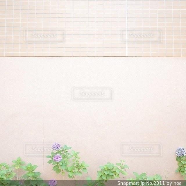 花の写真・画像素材[2011]