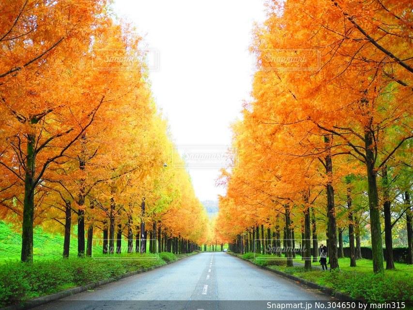 秋の写真・画像素材[304650]