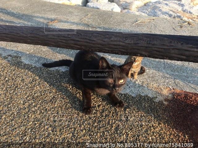 海辺で日光浴をする猫たちの写真・画像素材[805377]
