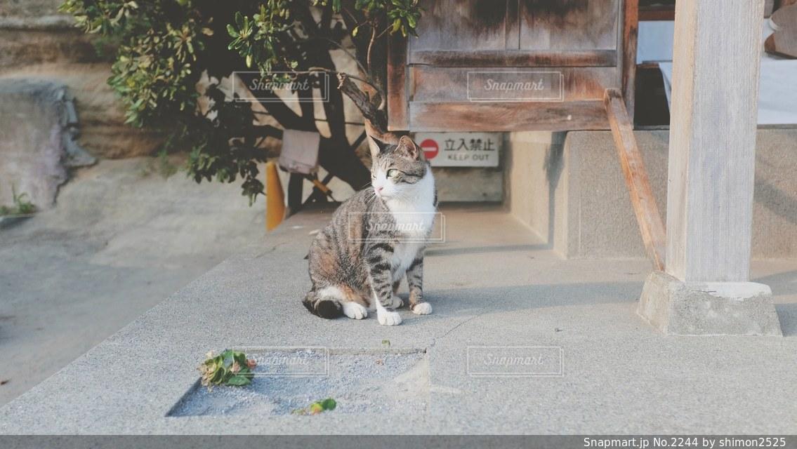 No.2244 猫
