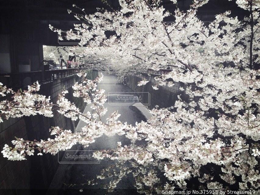 春 - No.375958