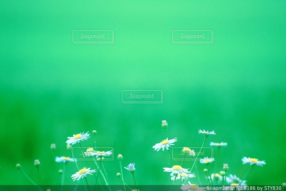自然の写真・画像素材[8186]