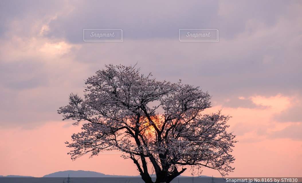 自然の写真・画像素材[8165]