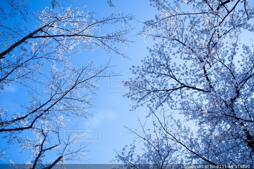自然の写真・画像素材[8151]