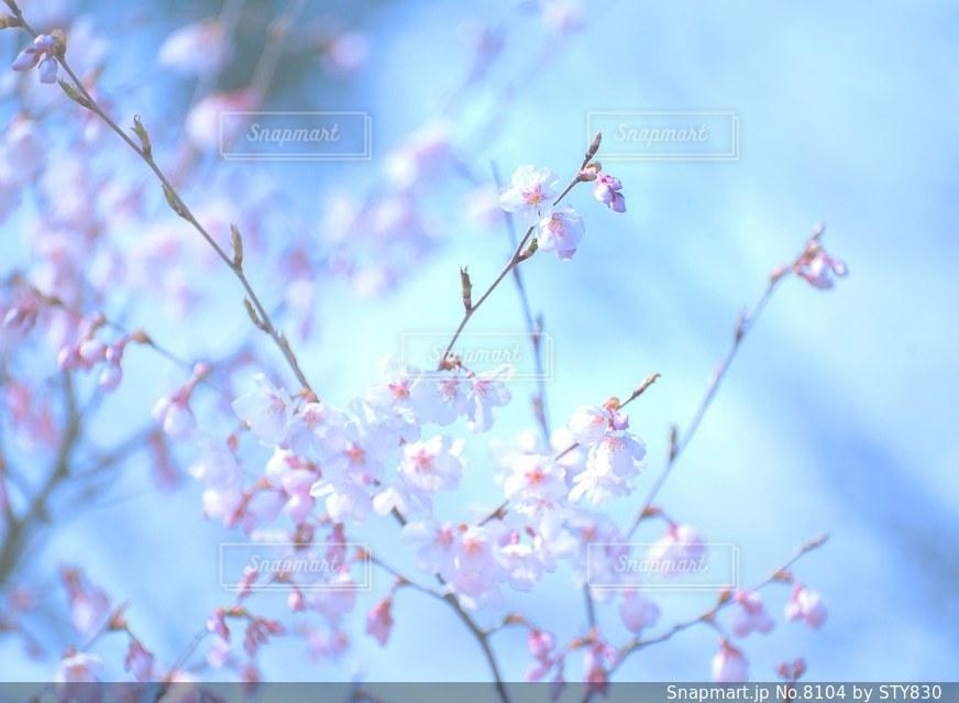 風景の写真・画像素材[8104]