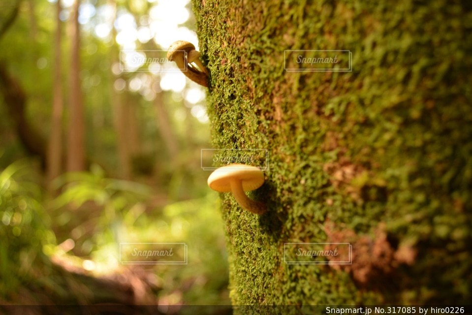 自然の写真・画像素材[317085]