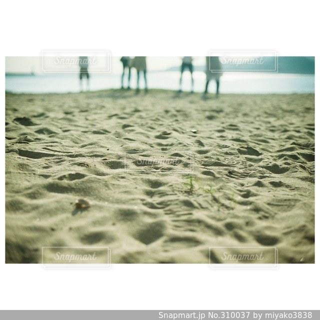 海の写真・画像素材[310037]