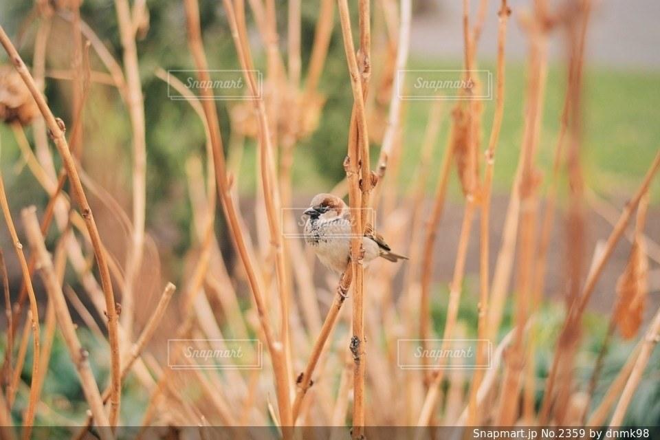自然の写真・画像素材[2359]