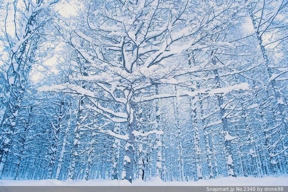 自然の写真・画像素材[2340]