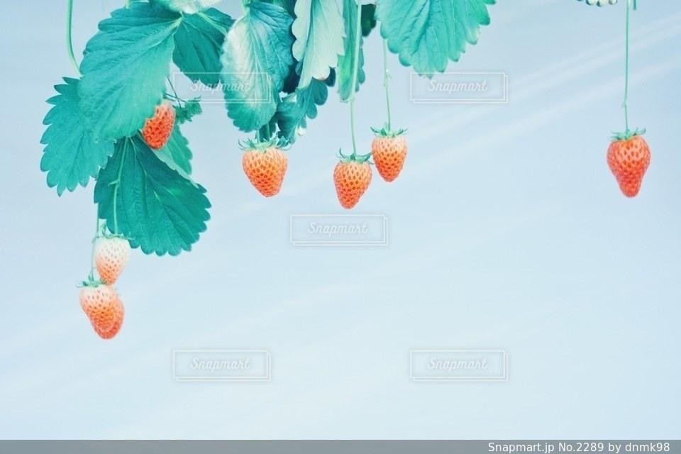 自然の写真・画像素材[2289]