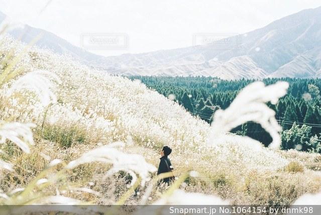 秋風に揺れるススキの写真・画像素材[1064154]