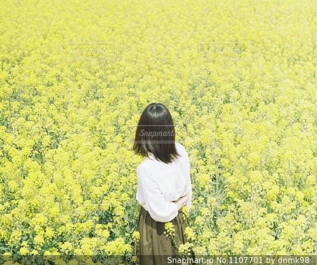 菜の花畑での写真・画像素材[1107701]