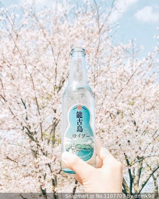 能古島サイダーでお花見!の写真・画像素材[1107703]
