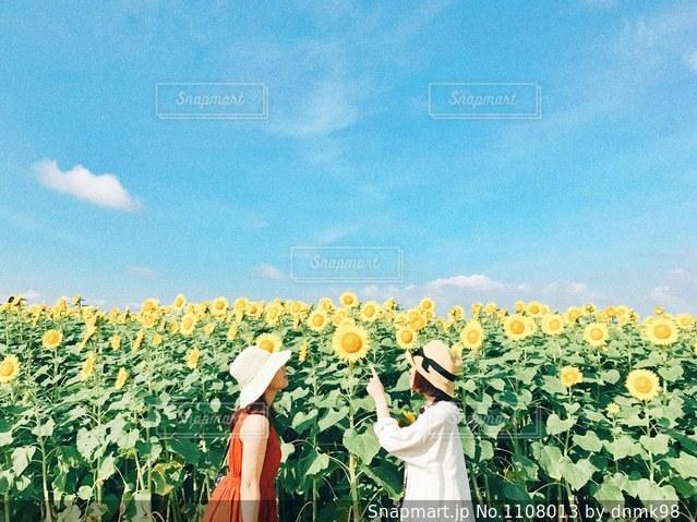 福岡より、夏の知らせ。の写真・画像素材[1108013]
