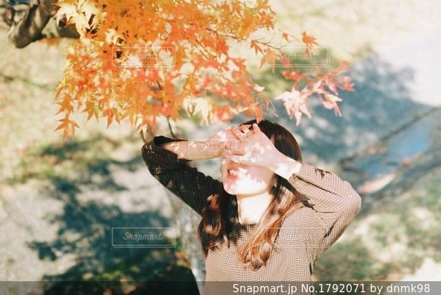 近くの木のアップの写真・画像素材[1792071]