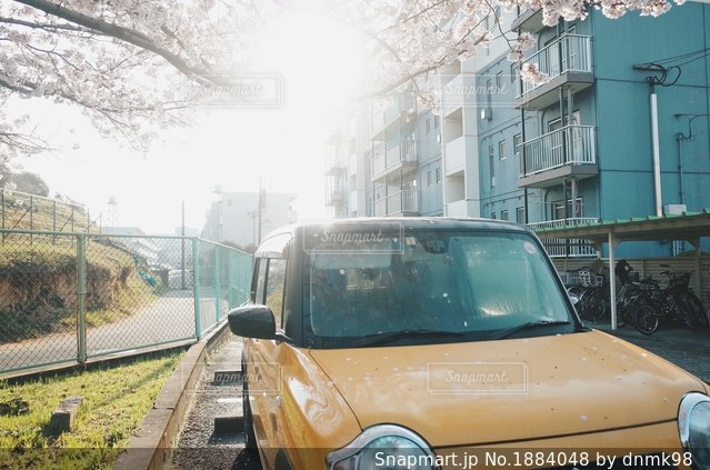 黄色の車と桜の木の写真・画像素材[1884048]