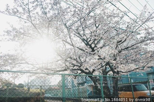 春が来た!の写真・画像素材[1884051]