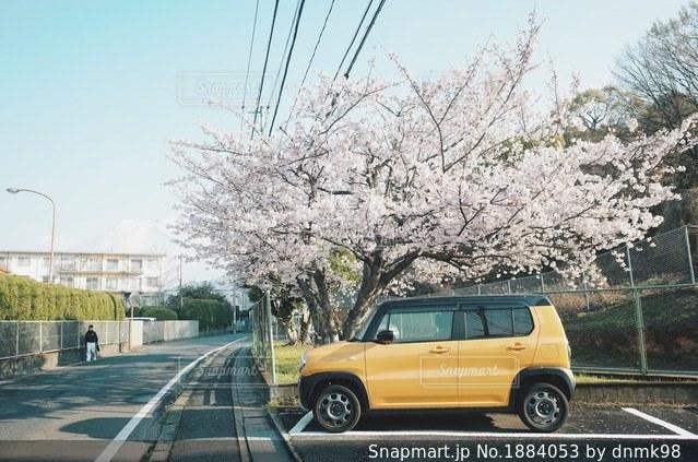 黄色の車と桜の木の写真・画像素材[1884053]