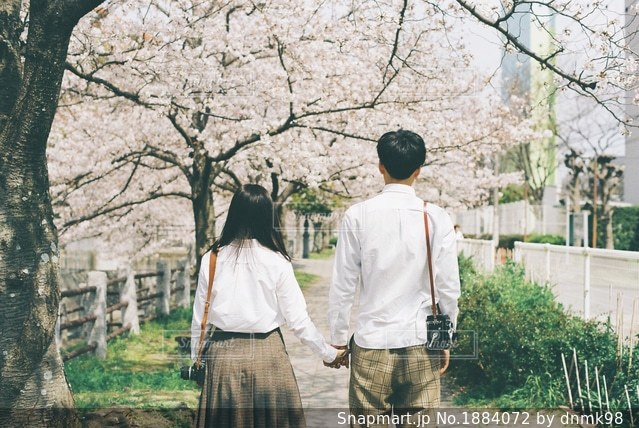 桜並木をお散歩するカップルの写真・画像素材[1884072]