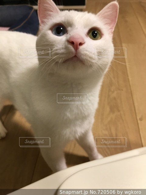 猫の隣に座っている白いシンクの写真・画像素材[720506]