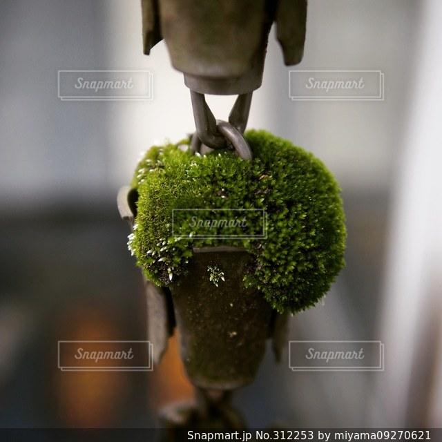 自然の写真・画像素材[312253]