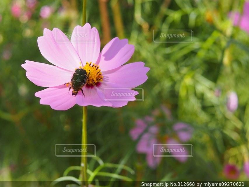 自然の写真・画像素材[312668]