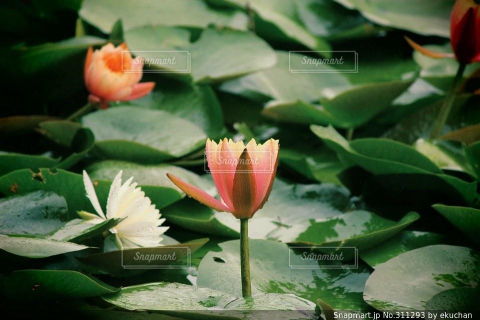花の写真・画像素材[311293]