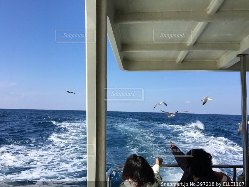 海,クルーズ,エサやり,ウミネコ,日本海,鳥取,浦富海岸