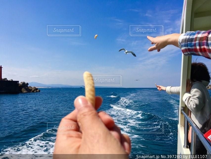 海,船,クルーズ,エサやり,ウミネコ,日本海,鳥取,浦富海岸