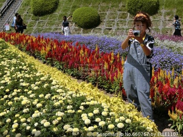 花の写真・画像素材[660767]