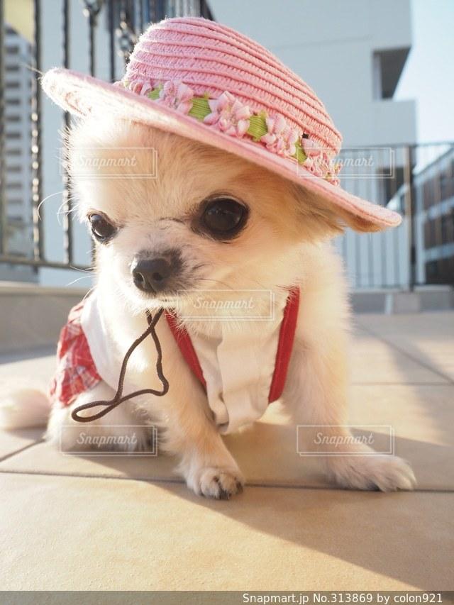 犬の写真・画像素材[313869]