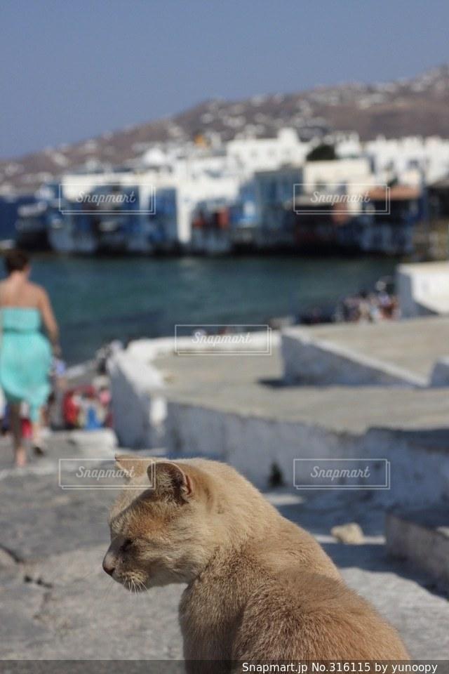 猫の写真・画像素材[316115]