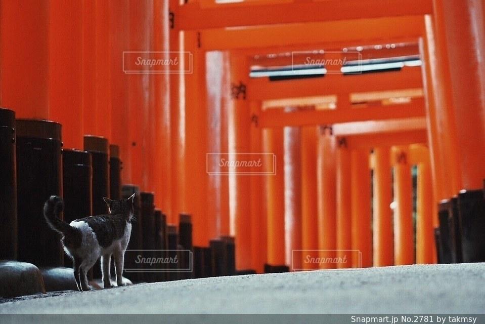 猫の写真・画像素材[2781]