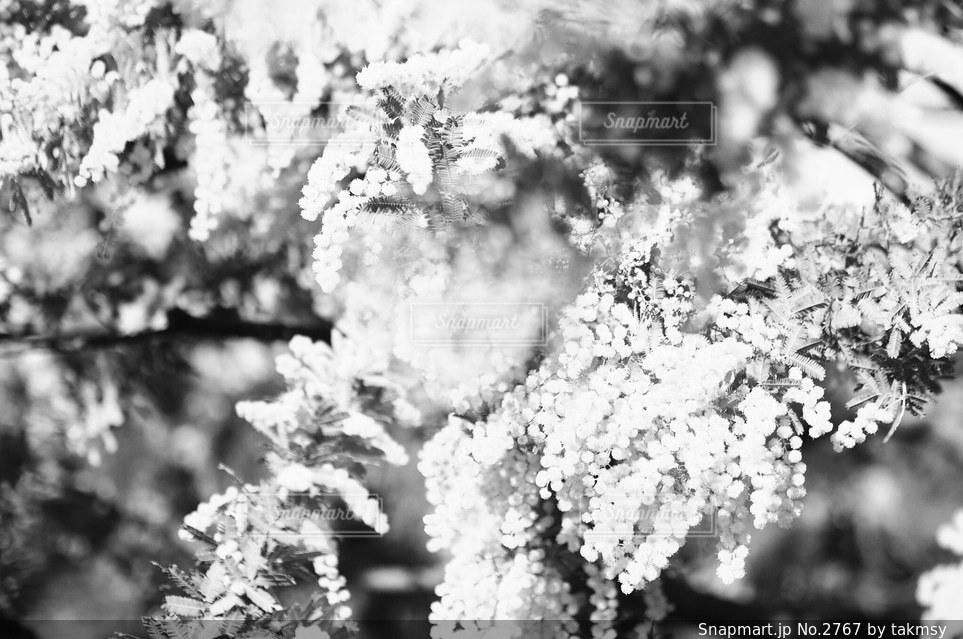 自然の写真・画像素材[2767]