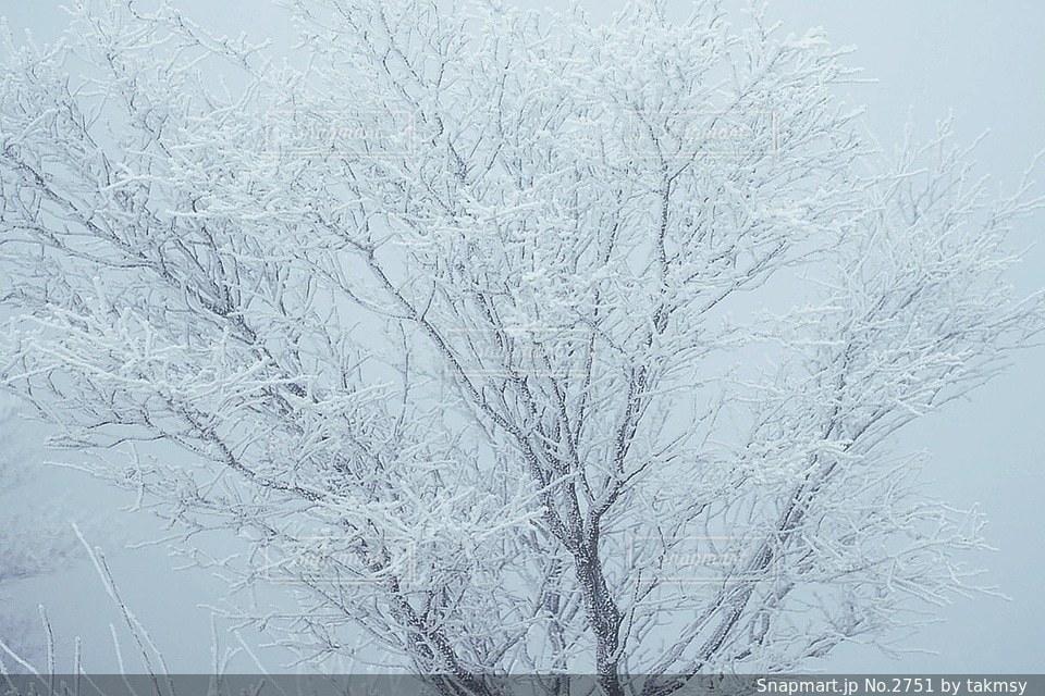 木の写真・画像素材[2751]