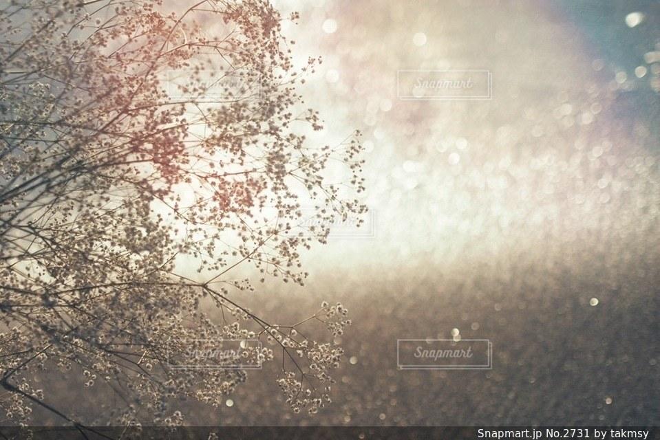自然の写真・画像素材[2731]