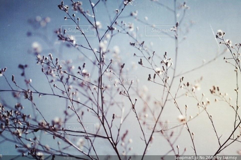 花の写真・画像素材[2696]