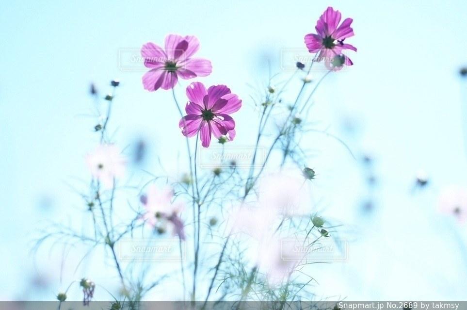 自然の写真・画像素材[2689]