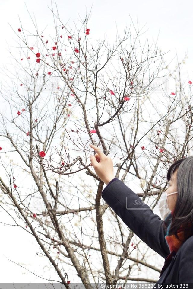 学生,ピンク,梅,お花見,女子高生