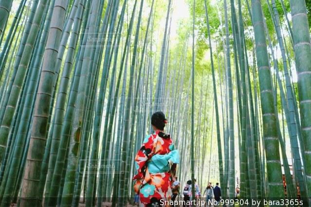 竹林の中に立つ女性の写真・画像素材[999304]