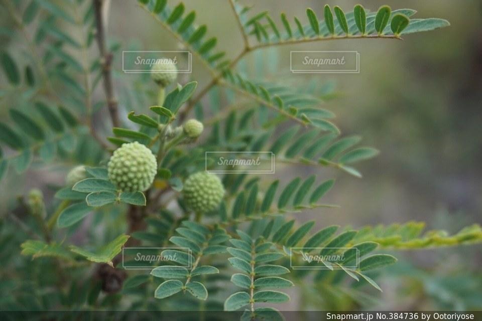 植物 - No.384736