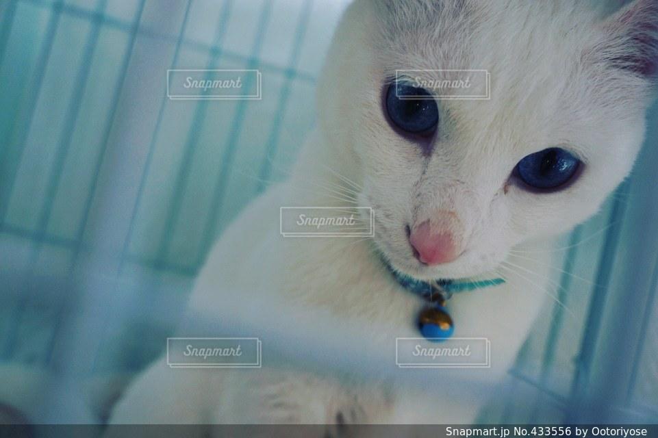 猫 - No.433556