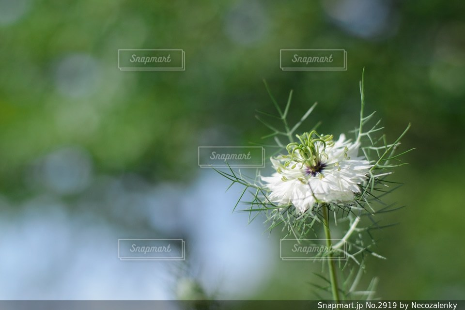 自然の写真・画像素材[2919]