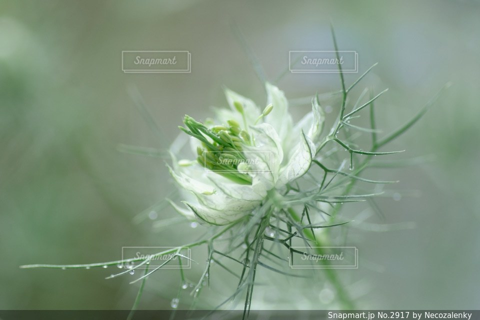 自然の写真・画像素材[2917]